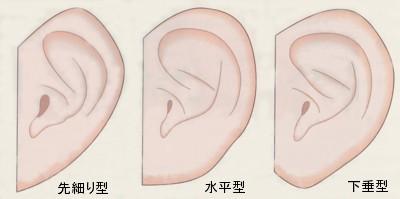耳たぶの形