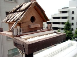 鳥小屋を作ってもらって設置して、雀が遊びに来るようになりました。