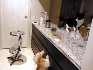 うちの猫とミニチュアダックス